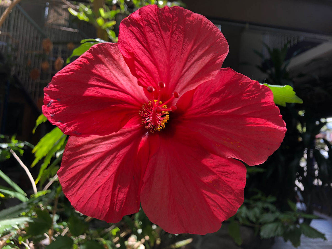 Flower in the atrium at 720 Tahoe Street where my company, PACE, is located and where I'm working to create a community space and art gallery for and with other creatives in the Reno area